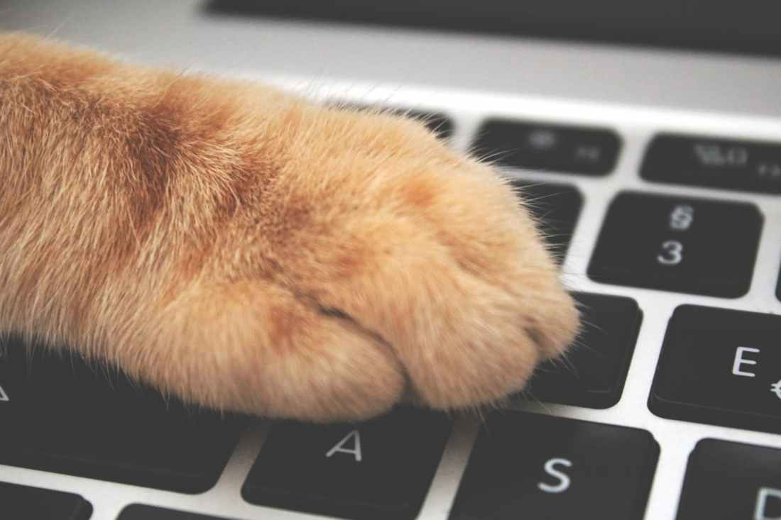 orange cat foot on laptop keyboard